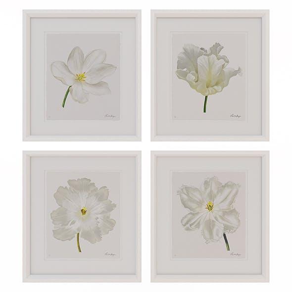 Charlotte Morgan White Watercolour Tulips