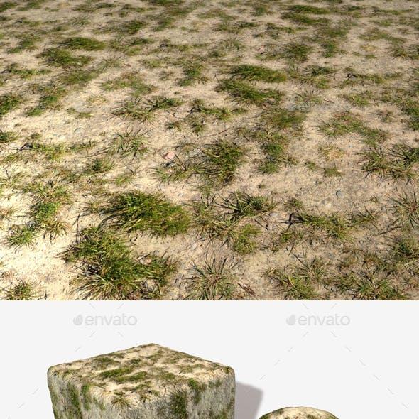 Desert Grass Seamless Texture