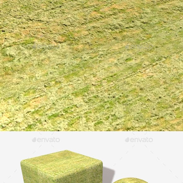 High Angle Cut Grass Field Seamless Texture