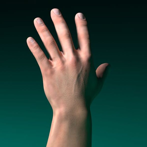 3D model human male hand - 3DOcean Item for Sale