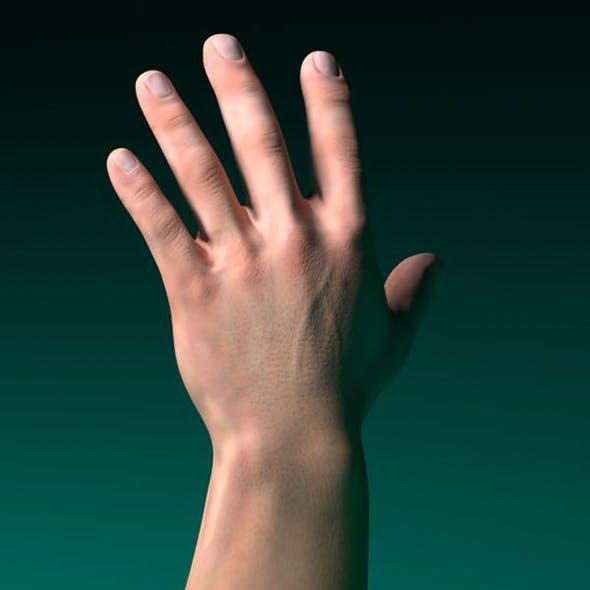 3D model human male hand