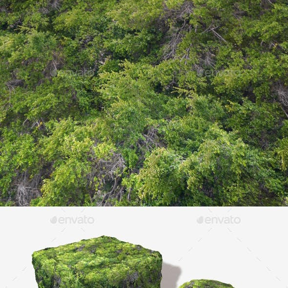 High Angle Tree Mass Seamless Texture