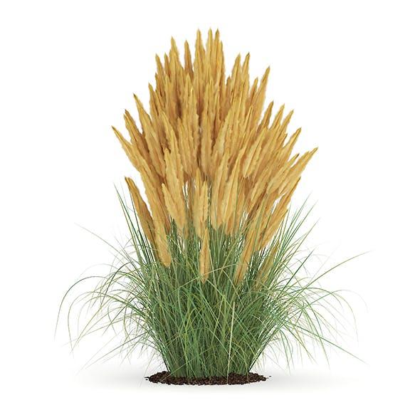 Ornamental Grass - 3DOcean Item for Sale