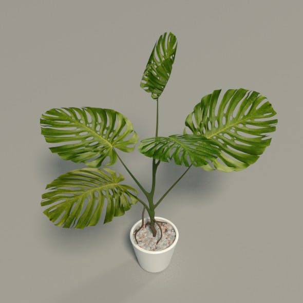Tropical Plant - 3DOcean Item for Sale