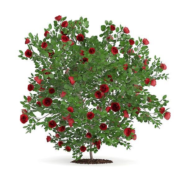 Red Rose Shrub - 3DOcean Item for Sale