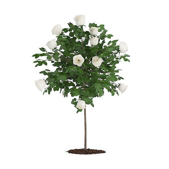 White Rose Tree - 3DOcean Item for Sale