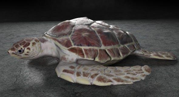 Sea Turtle - 3DOcean Item for Sale