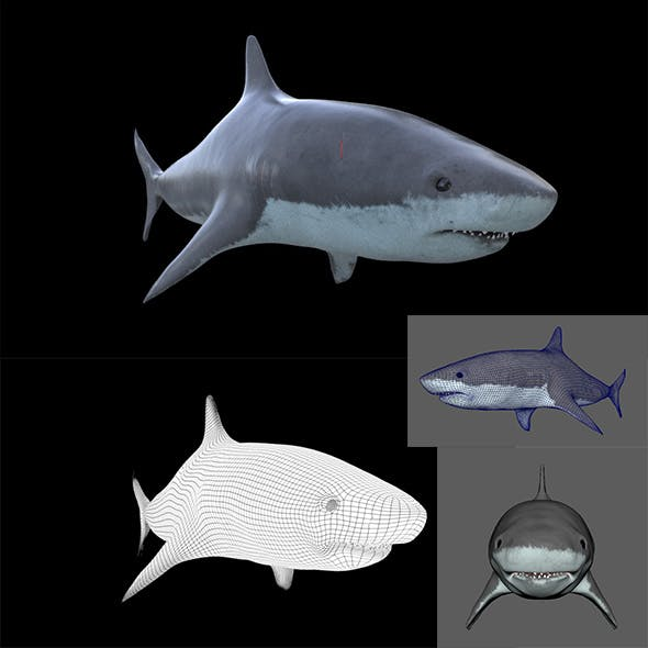 SHARK 3D Model Element Maya Obj arnold
