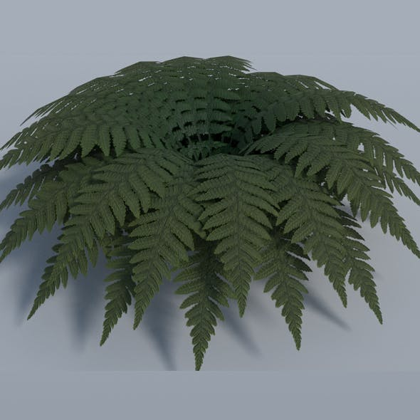 Fern - Low Poly