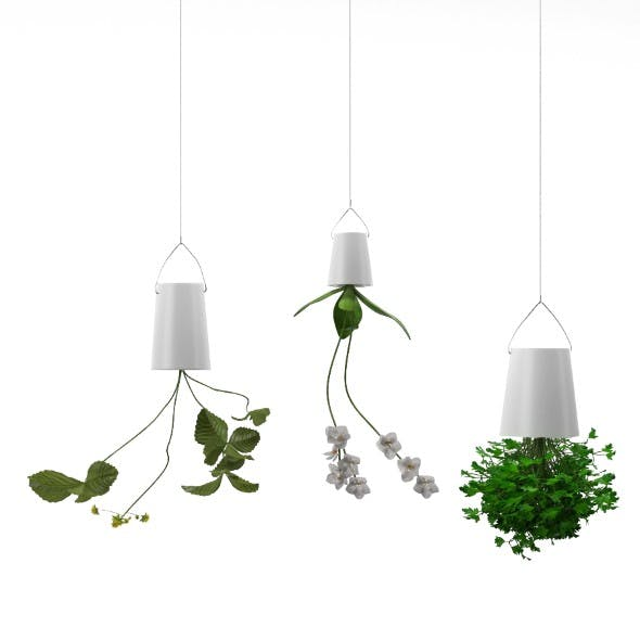 Plants in upside down hanging pots