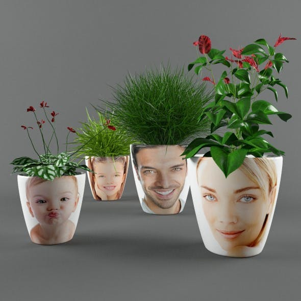 Plants in pots with photo