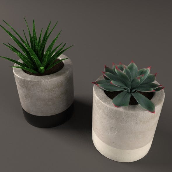 Plant Cactus and money tree - 3DOcean Item for Sale