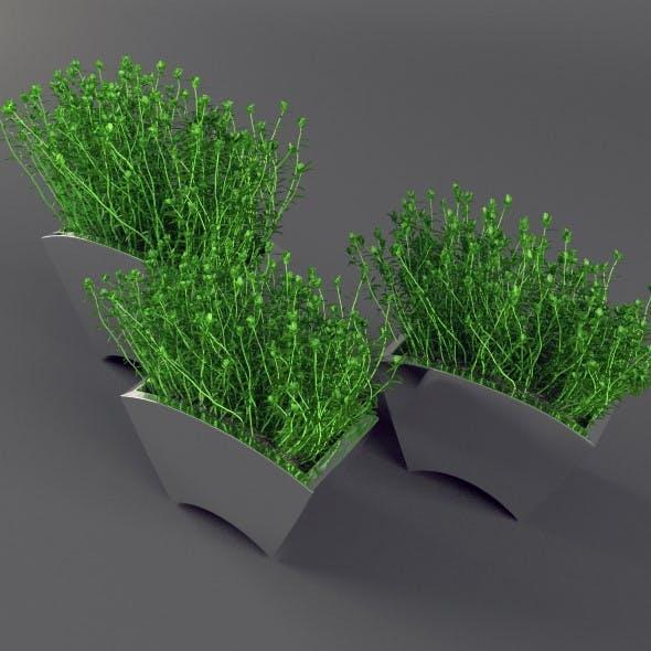 Plant in mirror pots