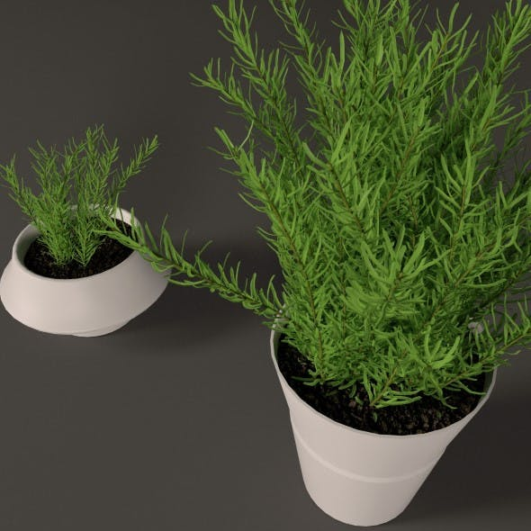 Plant in white plastic pot  - 3DOcean Item for Sale
