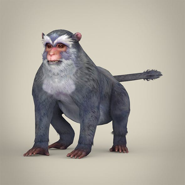 Game Ready White Monkey