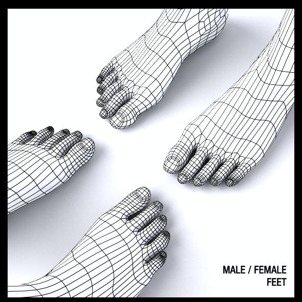 Male / Female Feet