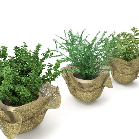Plants in a pots