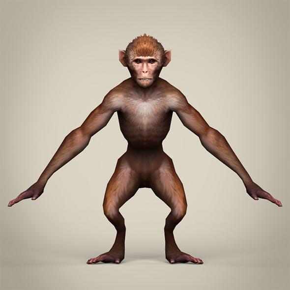 Game Ready Realistic Monkey