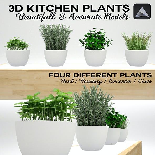 Kitchen Plants 3D