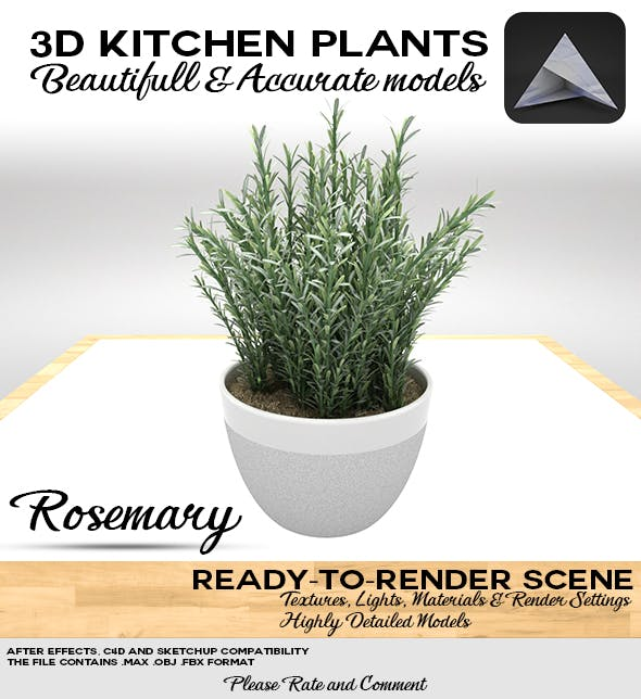 Rosemary Pot 3D - 3DOcean Item for Sale