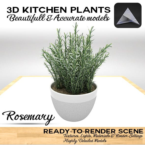 Rosemary Pot 3D