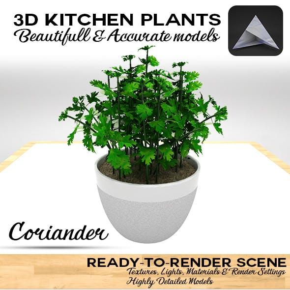 Coriander 3D Pot
