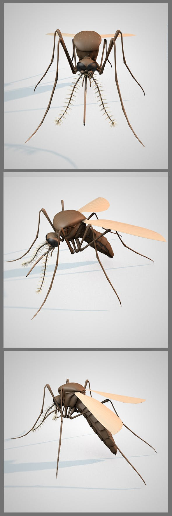 Mosquito - 3DOcean Item for Sale