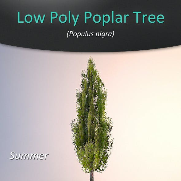 Low Poly Poplar Tree