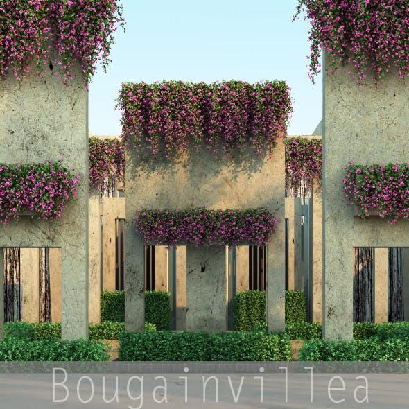 Bougainvillea - 3DOcean Item for Sale