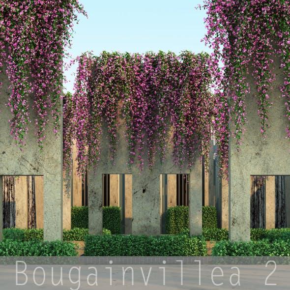 Bougainvillea 2 - 3DOcean Item for Sale