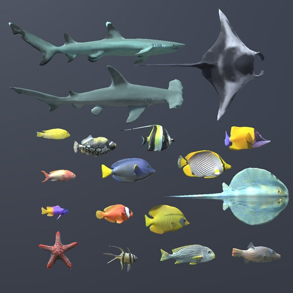 Coral Fish Pack