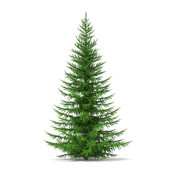 Norway Spruce (Picea abies) 4.9m - 3DOcean Item for Sale