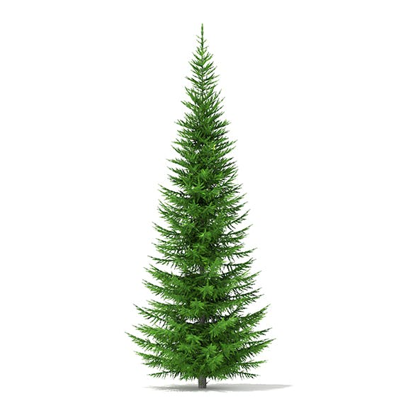 Norway Spruce (Picea abies) 7.3m - 3DOcean Item for Sale