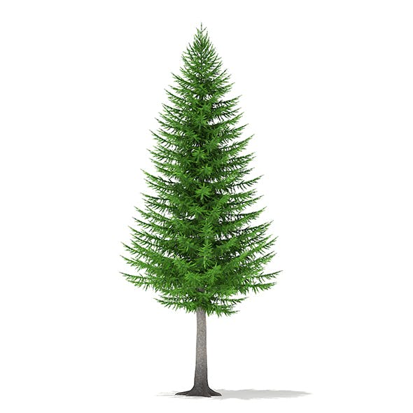 Norway Spruce (Picea abies) 8.3m - 3DOcean Item for Sale