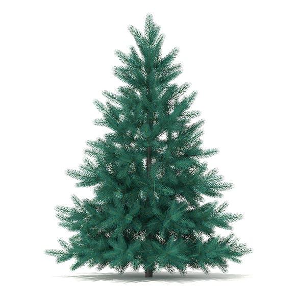 Blue Spruce (Picea pungens) 1.4m - 3DOcean Item for Sale