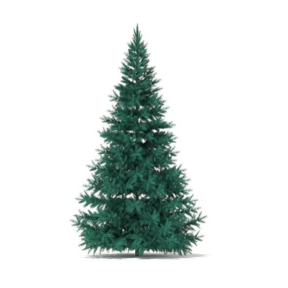 Blue Spruce (Picea pungens) 3.2m - 3DOcean Item for Sale