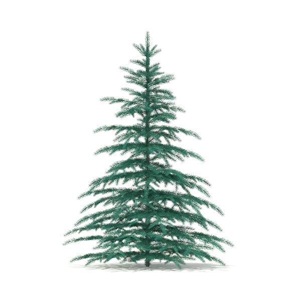 Blue Spruce (Picea pungens) 2.6m - 3DOcean Item for Sale