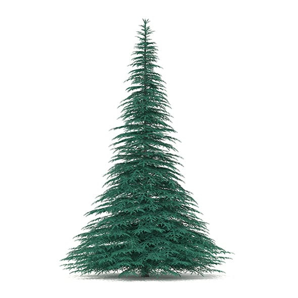 Blue Spruce (Picea pungens) 7.4m - 3DOcean Item for Sale