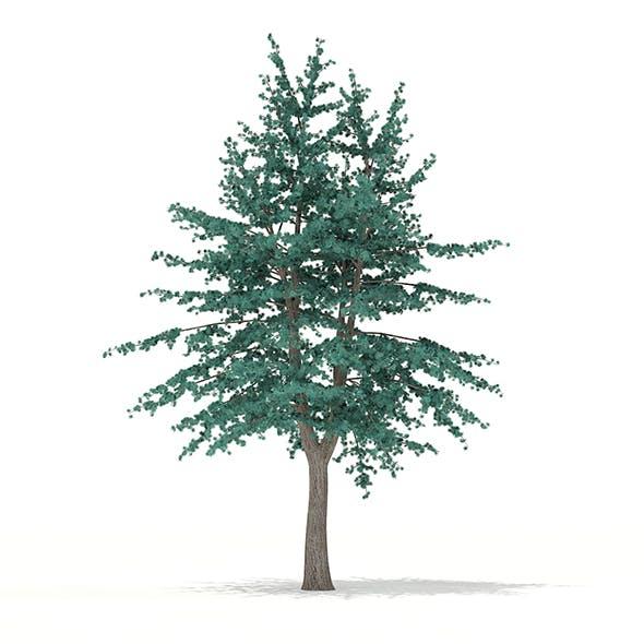 Blue Atlas Cedar (Cedrus atlantica) 2.9m - 3DOcean Item for Sale