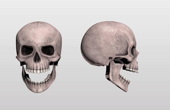 Skull - 3DOcean Item for Sale