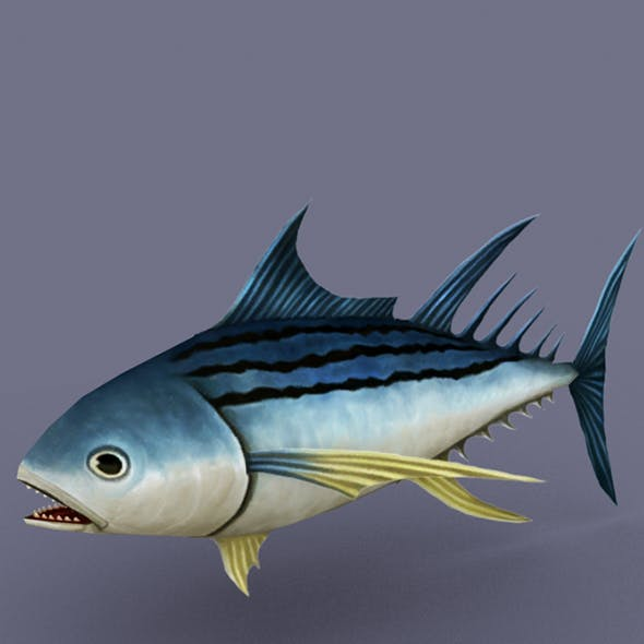 Striped Tuna dark
