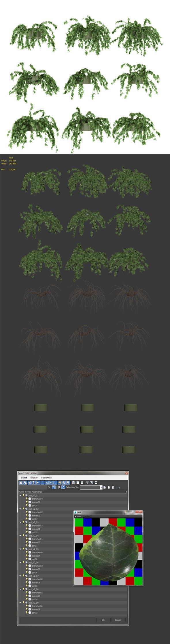 Ivy in pot. 9 models v2 - 3DOcean Item for Sale
