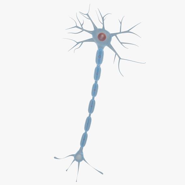 Neuron 01
