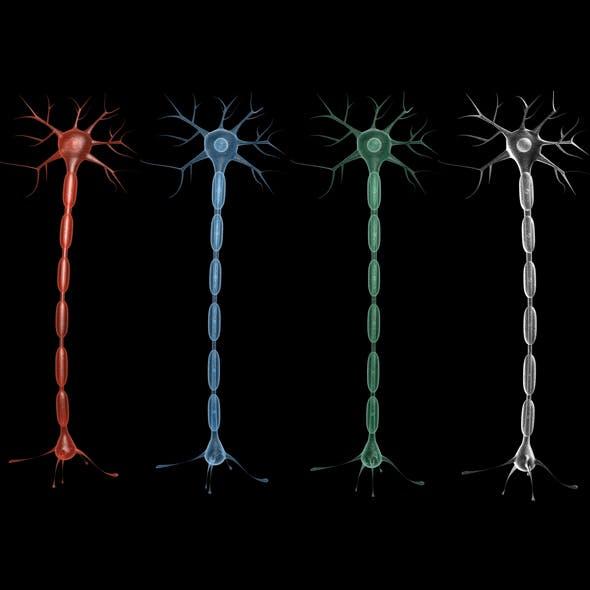 Neuron 02