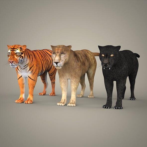 Tiger Lion & Black Leopard