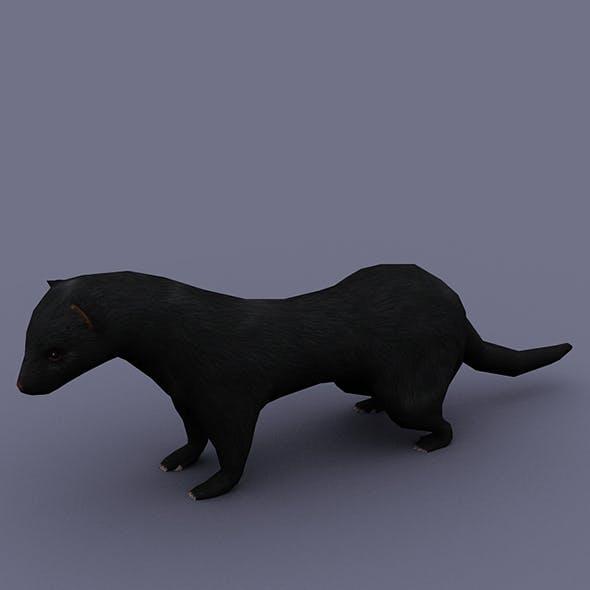 ferret black