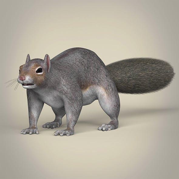 Realistic Squirrel