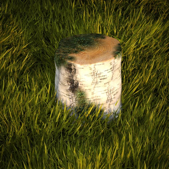 Birch stump with moss