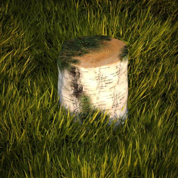 Birch stump with moss