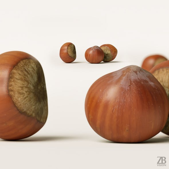 Hazelnut 001 - 3DOcean Item for Sale